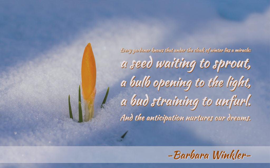 February Anticipation