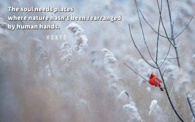 Winter Wisdom